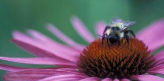 Plantas que atraen las abejas