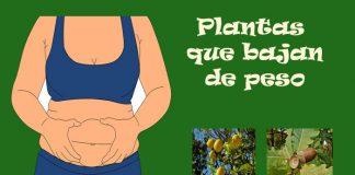 Plantas que bajan de peso