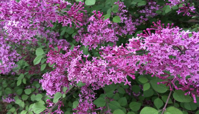 Plantas para atraer las abejas