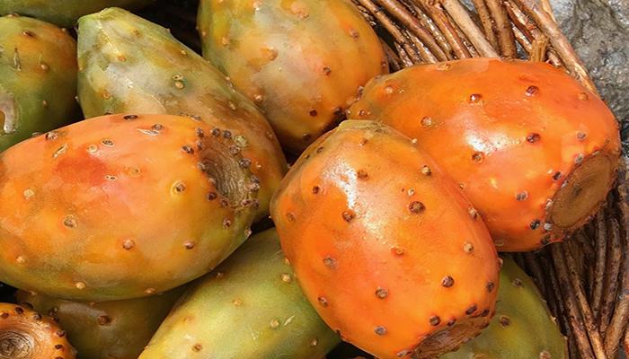 opuntia ficus-indica Frutos