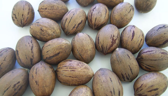 Frutos (nueces)