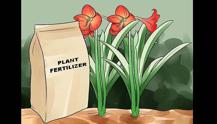 Fertilización