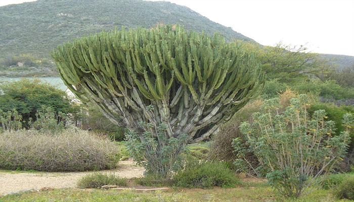 Plantas que hay en la sabana