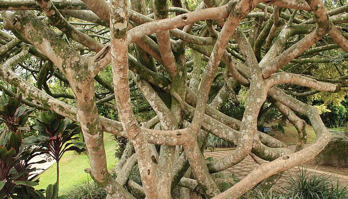Plantas que ayudan a hidratar la piel