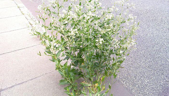 cultivo y flores
