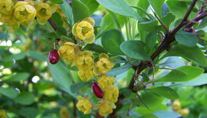 Plantas que atraen las garrapatas