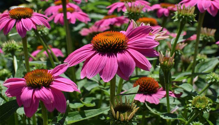 Plantas que sirven para rejuvenecer