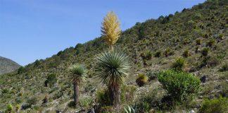 Esta es una imagen característica de lo que son plantas xerófitas