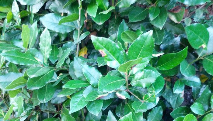 Plantas que habitan en la sabana