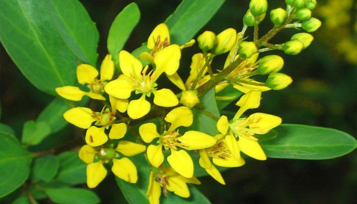 Plantas que ayudan al sistema nervioso