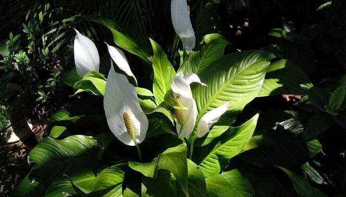 Plantas que pueden crecer sin luz solar