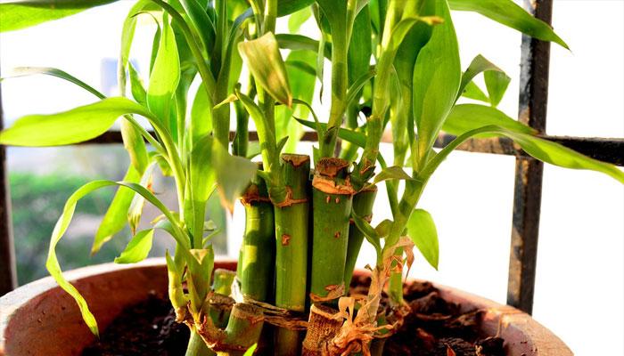 Plantas que no necesitan luz solar