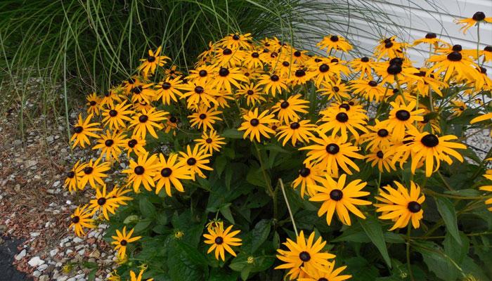 Plantas para jardín soleado