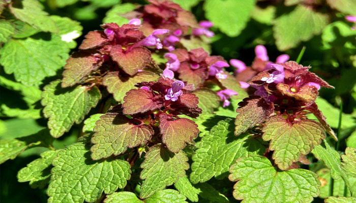 Plantas de jardín exterior