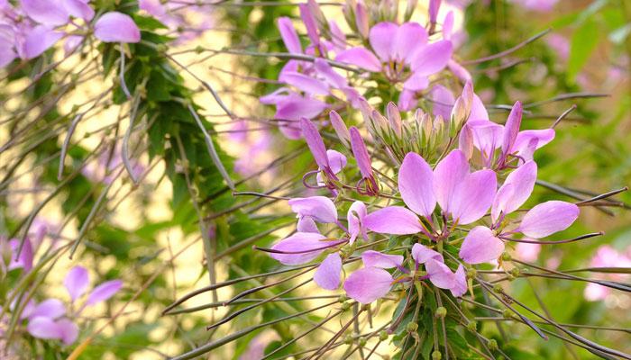Plantas que humectan la piel