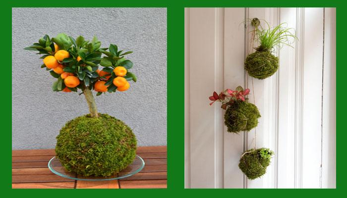 Algunas plantas y estilos Kokedama