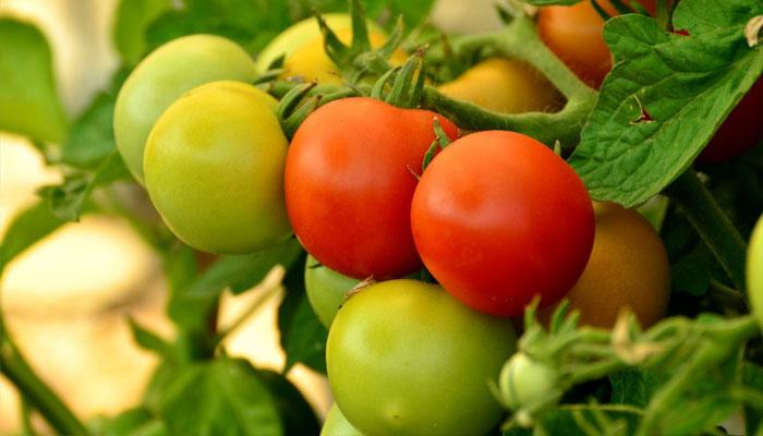 Plantas que dan frutos