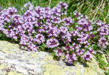 Plantas que crecen en rocas