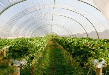 Invernadero para plantas