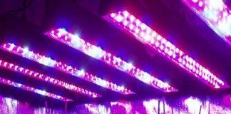 Luz ultravioleta para plantas