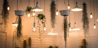 Las plantas de interior deben tener una buena iluminación