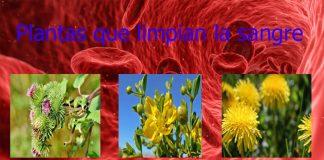Plantas que limpian la sangre