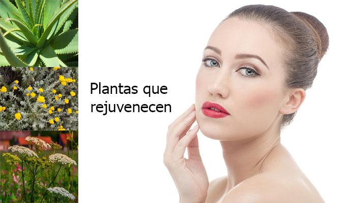Plantas que rejuvenecen
