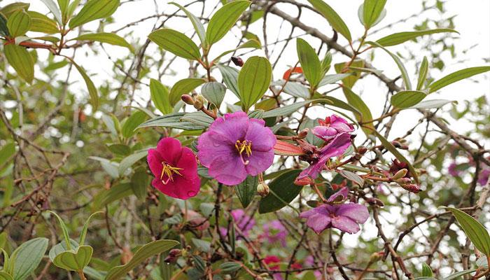Existe una amplia gama de tamaños y colores de flores
