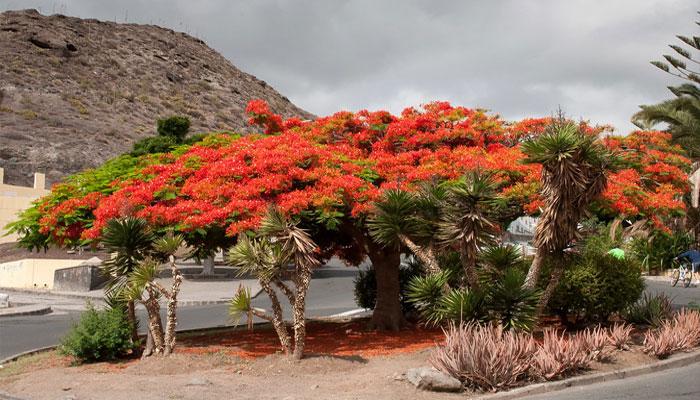 Hermoso árbol ornamental