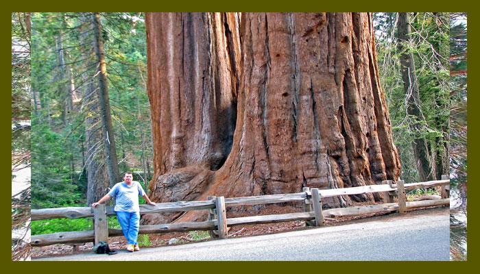 Es el árbol más grande del mundo