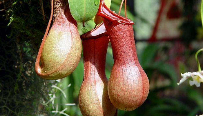 planta jarra