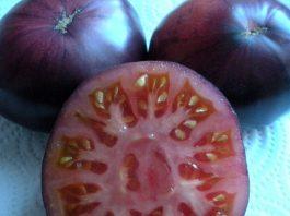 tomate azul