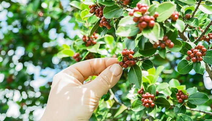 propiedades y beneficios de la planta de café